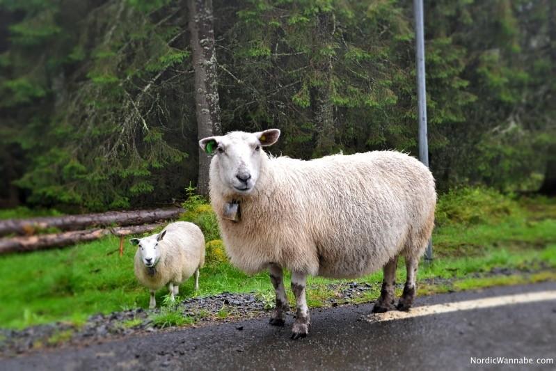 Trollstigen, Norwegen, Andalsnes, Blog, Skandinavien, Kreuzfahrt