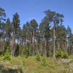 Wald, Natur, Schweden, Skandinavien, Blog