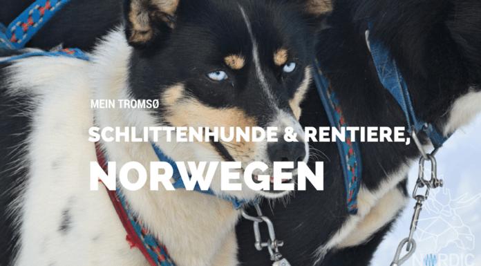 Huskies, Schlittenhunde, Tromso, Tromsø Safari, Farm, Rentiere, Schlittenhund, AIDAcara, Kreuzfahrt, Norwegen, Nordnorwegen, Skandinavien, Blog, Blogger, Schnee, Berge, Streicheln,