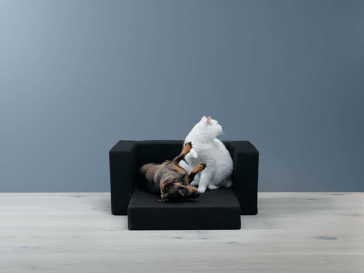 ikea lurvig m bel f r hunde und katzen hundesofa katzensofa kratzbaum napf hundeleine. Black Bedroom Furniture Sets. Home Design Ideas