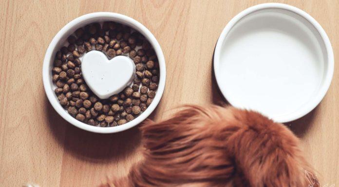 Hygge für den Hund, Hundefutter aus Skandinavien, Näpfe, Pflegeshampoo Hund, Feuchttücher, Bürste, Søstrene Grene