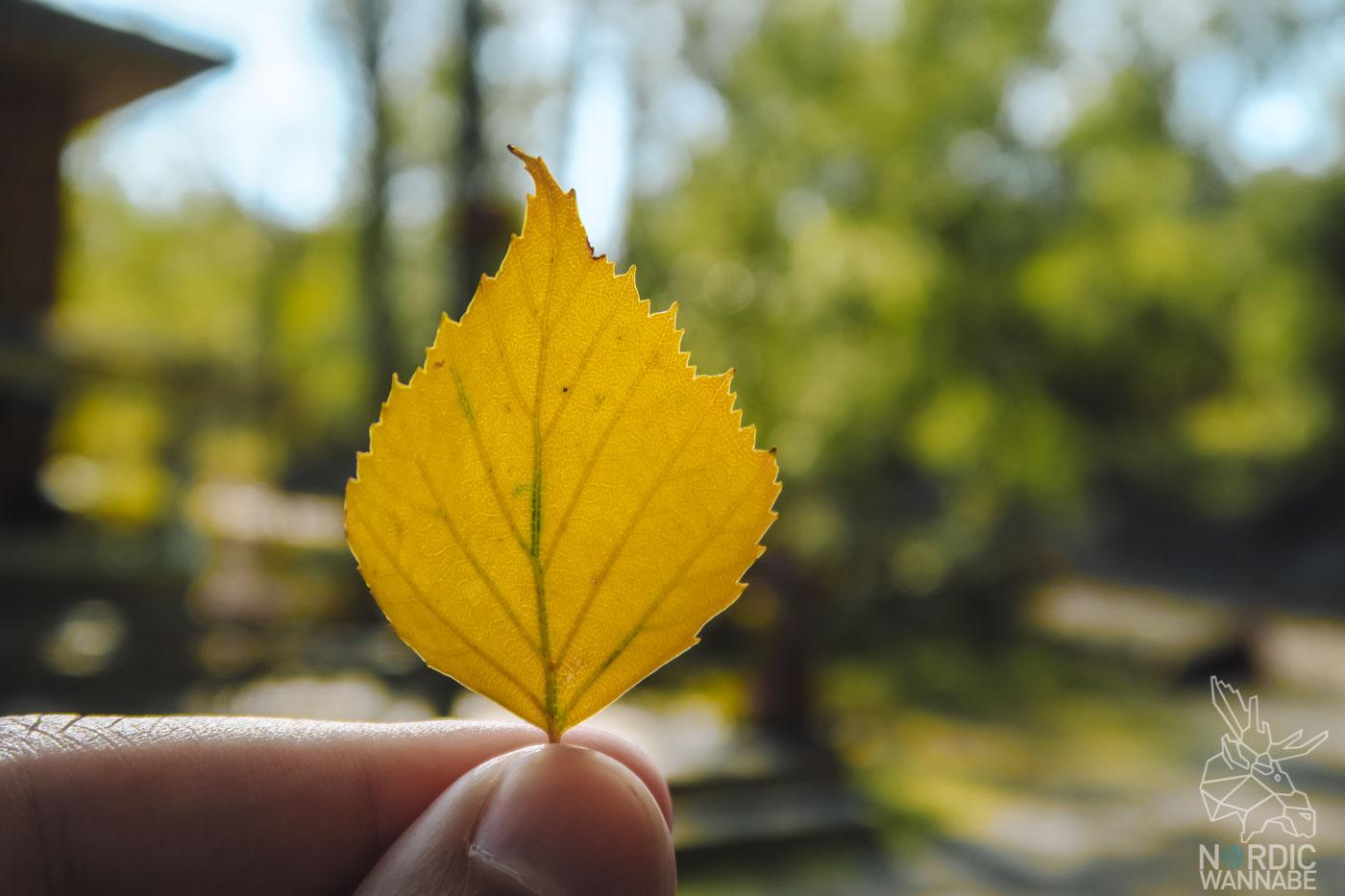 Finnland, Sommer, Blog, Herbst