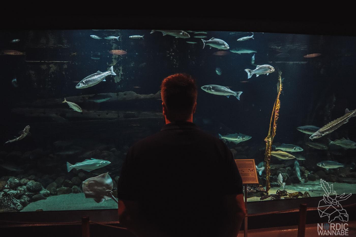 Esbjerg, Dänemark, Süddänemark, Südjütland, Marine und Fischerei Museum